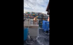 Balansowanie na statku