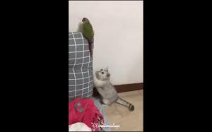 Zobacz ptaszku, to chyba nowa farba!