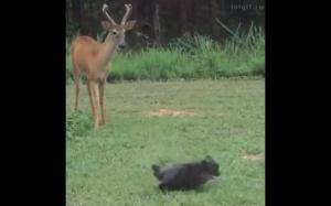 Zjeżdżaj stąd!