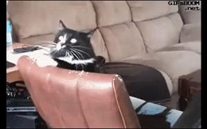 Kiedy usypiając słyszysz dźwięk latającego komara