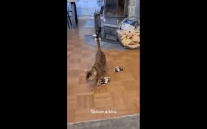 Jak złapać kota