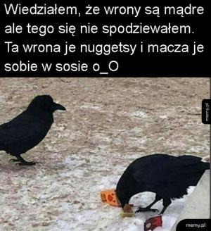 Mądre wrony