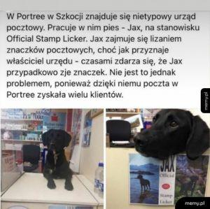 Pies pocztowy