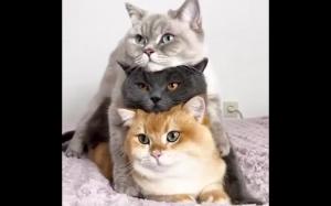 Kocia piramida