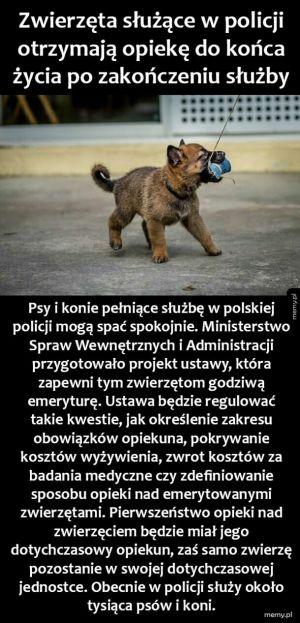 Zwierzęta w policji