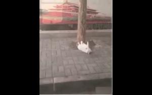Kto powiedział, że koty są leniwe?