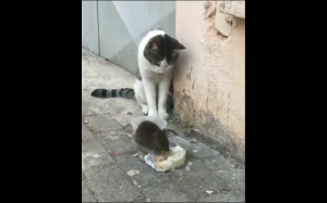 Ej, to moje!
