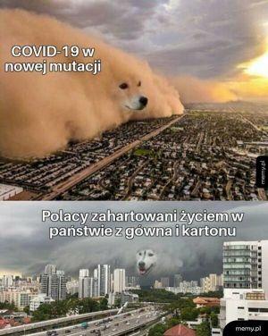 Zahartowani Polacy