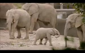 Małe słonie są super