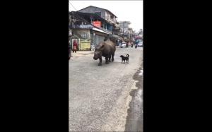 Typowy dzień w Nepalu