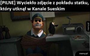 Ach, te pingwiny