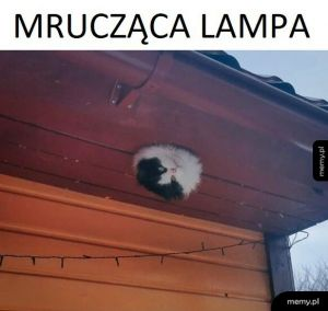 Mrucząca lampa