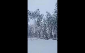 Śnieżne przeciążenie