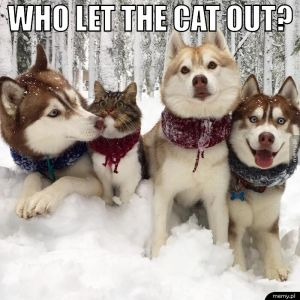 Who let the cat out?