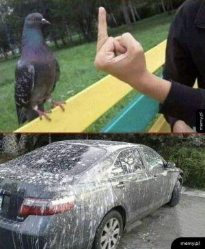 Zemsta gołębia
