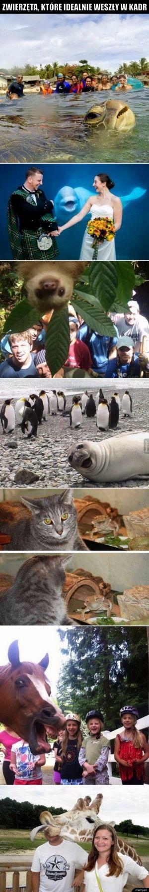 Zwierzęta, które idealnie weszły w kadr