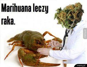 Marihuana leczy raka