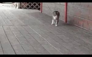 Koteł chyba myśli, że jest koniem