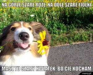 Gdyby psy pisały wiersze