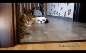Czo ten kotełek :D