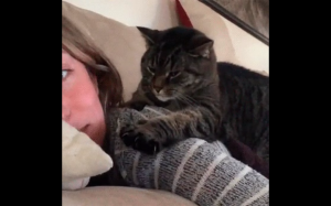 Dylemat kota - zabić czy kochać