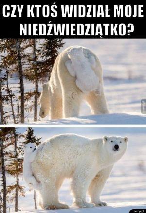 Niedźwiedziątko