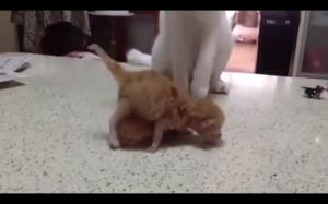 Rzadki koci rytuał dający 9 żyć