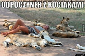 Odpoczynek z kociakami.