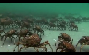 Armia krabów