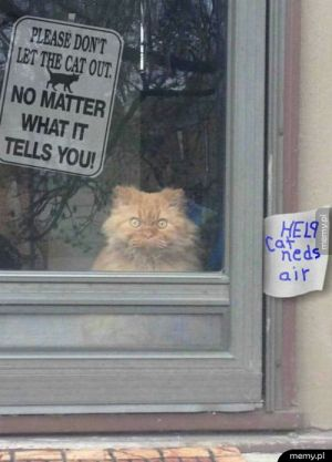 Nie wierzyć kotełowi!
