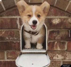 Hej, masz maila