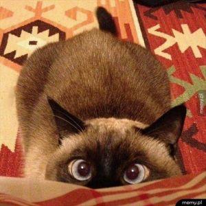 Kiedy jesz kanapkę z tuńczykiem,  koty w magiczny sposób zmienia się w postaci z kreskówek