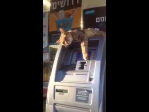 Bankomat chwilowo nieczynny.