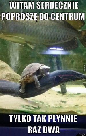 Czo ten żółw