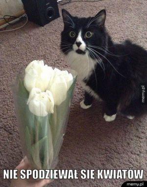 Nie spodziewał się kwiatów.