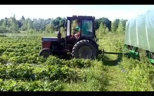 Maszyna do zbierania truskawek