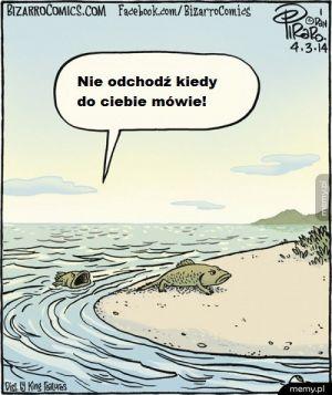 Tak życie wyszło z morza