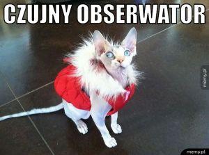 Czujny obserwator.