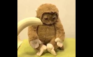 Dziwna małpka
