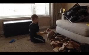 Nie zadzieraj z kotem