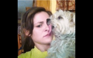 Pies.exe przestał działać
