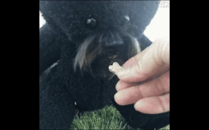 To co niedźwiadki lubią najbardziej.