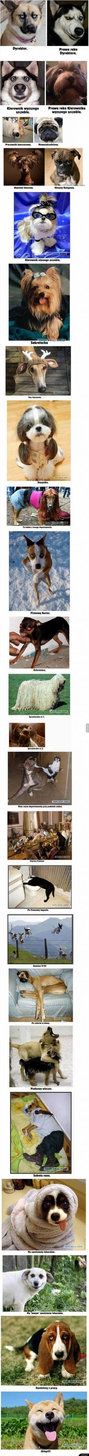 Korporacja w psim wydaniu