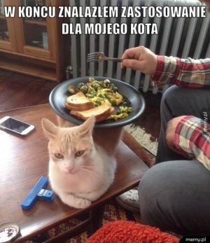 Zastosowanie kota