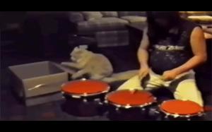 Koteł perkusista
