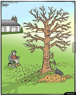 Gdyby drzewce istniały