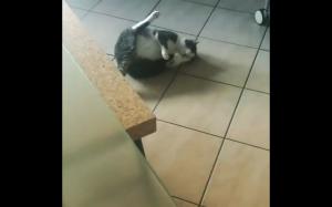 Kot się zepsuł
