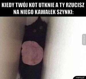 Koteł w potrzasku