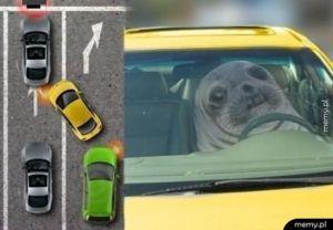 Najgorsi kierowcy