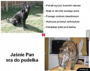 Psy vs koty